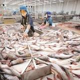 """Doanh nghiệp cá tra: Vẫn """"chật vật"""" với Nghị định 36"""