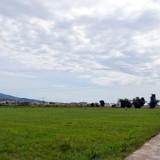Ngổn ngang đất nông nghiệp bỏ hoang do... dự án
