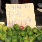 Tiểu thương Sài Gòn buôn chanh đào kiếm tiền triệu mỗi ngày