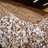 Bộ Tài chính đề nghị tạm dừng thu thuế xuất khẩu mặt hàng sắn