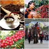 Trà Mộc Châu, cà phê Buôn Ma Thuột và cơ hội lớn từ EU