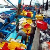 Trúng đậm cá ngừ sọc dưa, ngư dân kiếm cả trăm triệu đồng
