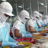 Pháp giảm nhập khẩu bạch tuộc từ Việt Nam
