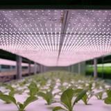 Công nghệ 24h: Nhật Bản cho robot trồng rau, nhà mạng chạy đua gói cước Facebook