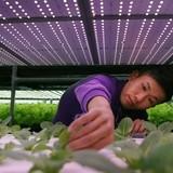 Nhật Bản sắp có nhà máy trồng rau bằng robot