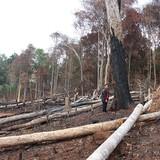 """Đắk Nông: Hàng chục nghìn hécta rừng """"biến mất"""""""