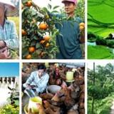 """TS. Đặng Kim Sơn: """"Môi trường chính sách như vậy, đầu tư nông nghiệp thành công là dũng cảm lắm"""""""