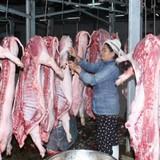 Bơm nước vào gia súc sẽ bị phạt 5-6 triệu đồng
