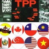 """""""Không nên ăn mừng TPP quá sớm"""""""