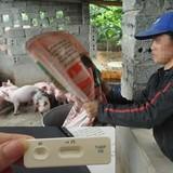 Có chất gây ung thư trong thức ăn chăn nuôi