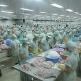 Xuất khẩu cá tra vào Trung Quốc tăng vọt