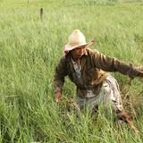 Kiếm tiền từ nghề săn cỏ ở Sài Gòn