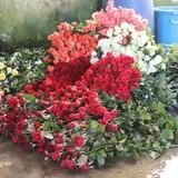 Thị trường hoa Đà Lạt kém sôi động