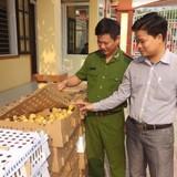 Hàng nghìn gà vịt không rõ nguồn gốc đi xe khách từ Hà Nội qua Vinh