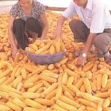 Từ nước xuất khẩu, Việt Nam đang trở thành nước nhập khẩu nông sản?