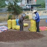 Thương lái Trung Quốc trở mặt, tư thương Việt lỗ nặng