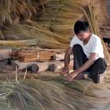 """Kiếm tiền từ cây cỏ hoang: Chổi chít """"quét"""" đói nghèo"""