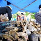 Người Nhật muốn nuôi ngọc trai Phú Quốc: Con dao hai lưỡi