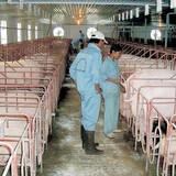 Doanh nhân và cuộc dấn thân trăm tỷ đồng vào nghề nông