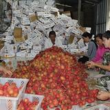 """Truyền thông đã """"giết"""" nông sản Việt?"""