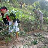 Bí quyết kiếm tiền dưới tán rừng cao su