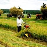 Nông nghiệp hội nhập: Vai trò chủ đạo của doanh nghiệp