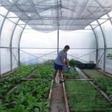 Thêm nhiều nhà kính trồng rau ở Trường Sa