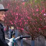 Đường hoa, chợ hoa dịp Tết Bính Thân sẽ được phục vụ Wi-Fi miễn phí