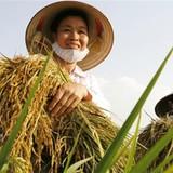 """Tiến sĩ nông nghiệp Nguyễn Quốc Vọng: """"Tôi thương người nông dân Việt Nam"""""""