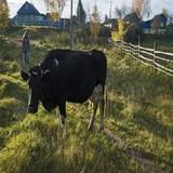 Báo Mỹ: Nga sẽ sớm vượt trừng phạt vươn lên thành siêu cường nông nghiệp?