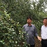"""""""Vua làm vườn"""" Thái Nguyên thu tiền tỷ từ táo"""