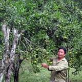 Làm giàu từ trồng cây ăn quả