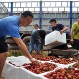 """Doanh nghiệp """"đói"""" thông tin thị trường xuất khẩu"""