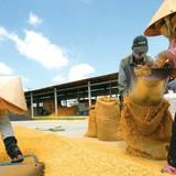 Thị trường 24h: Gạo Việt Nam mang thương hiệu Trung Quốc