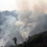 Cháy rừng ở Nghệ An, 104 ha cây cối bị thiêu rụi
