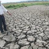 Tăng trưởng ngành nông nghiệp giảm mạnh