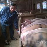Cách làm… khác người của chủ trang trại lợn tiền tỷ