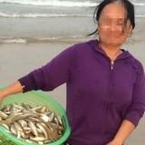 Kiếm tiền triệu nhờ vớt cá chết bán cho thương lái