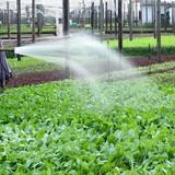 Xác nhận nông sản, thực phẩm an toàn: Vì sao khó?