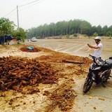 Thương lái Trung Quốc ồ ạt lên Tây Nguyên thu mua thảo dược quý
