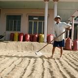 """Thái Lan xả kho gạo: Doanh nghiệp và chuyên gia Việt Nam """"sốt vó"""""""