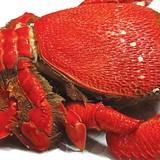 Những hải sản quý hiếm giá bạc triệu hút khách