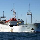 Hai ngư dân Việt bị tố sát hại thuyền trưởng Hàn Quốc