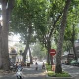 TPHCM: Sẽ di dời cây xanh để xây nhà ga Bến Thành