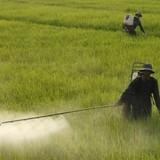Mỗi ngày cho 20,5 tỷ đồng nhập thuốc trừ sâu từ Trung Quốc: Việt Nam đang tự đầu độc chính mình
