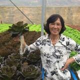 Tự tạo cơ hội: Trồng rau thủy canh thu lãi lớn