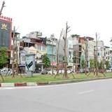 Chủ tịch Hà Nội lý giải việc trồng hàng loạt phượng trên phố