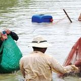 Cấp khống thức ăn thủy sản: Địa phương bó tay, nông dân bất bình