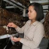 Tự tạo cơ hội: Gây dựng trại nấm rơm sạch