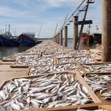 Phương án xử lý, tiêu thụ 3.900 tấn hải sản tồn kho ở miền Trung